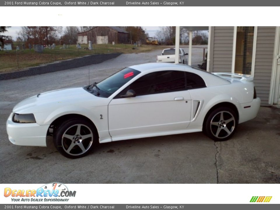 2001 ford mustang cobra coupe oxford white dark charcoal. Black Bedroom Furniture Sets. Home Design Ideas